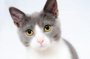 בריאות החתול