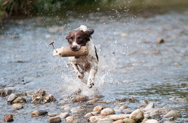 הבדלי בין אוכל כלבים לגורים