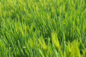 שטח ציבורי ודשא סינטטי - הפיתרון המושלם לעלויות התחזוקה