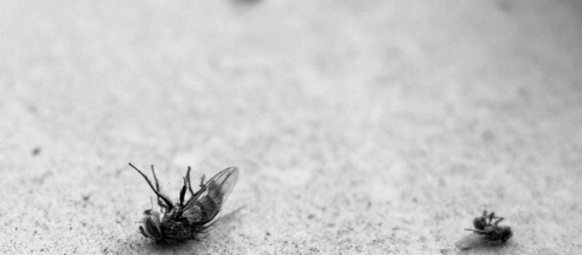 מול איזה חרקים אנחנו מתמודדים